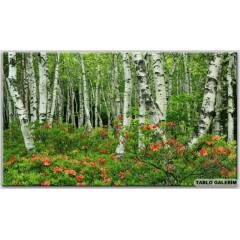 50x70 KANVAS TABLO FORESTS JAPAN B�RCH TREES