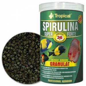 Tropical spirulina super forte gittigidiyor for Comida congelada para peces